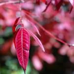 thanks leaf 2