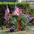 Patriotic Flowers on Cape Cod